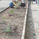sadzenie roślin