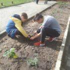 uczniowie sadzą rośliny