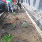 przyszkolny ogródek